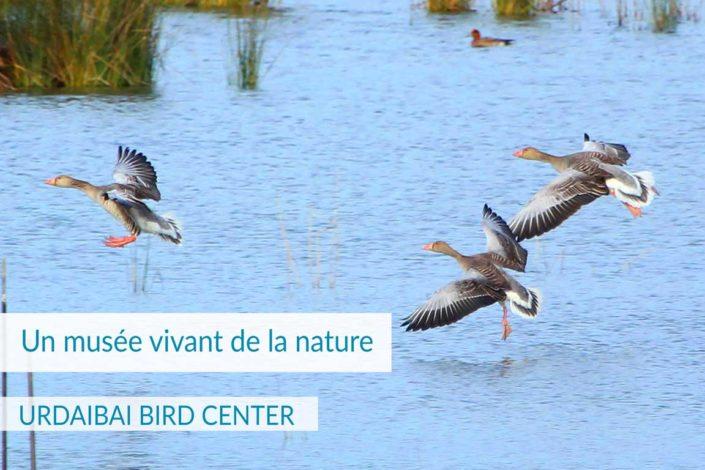 BIRD CENTER